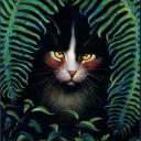 Warrior Cats Haven