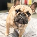 Bulldog Emoji Server