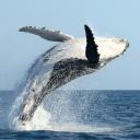🃏黑鲸Black Trader Team🃏
